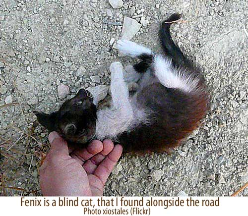 Blind cat by the road