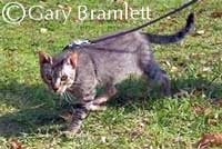 Bramble cat
