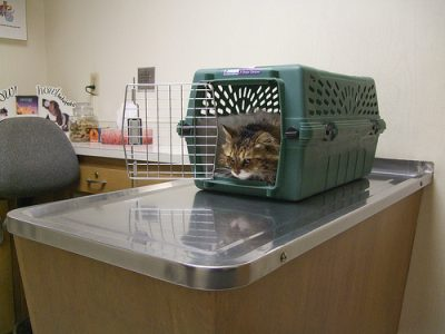 cat at vets