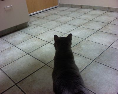 Cat at the vets - pictures of cats