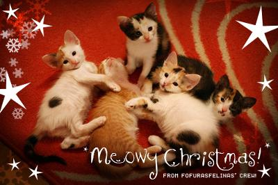 Photo by fofurasfelinas - What more can you ask? A photo by the best Flickr cat photographer and a cat Christmas poem by Zach