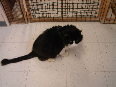 "Cat ""Babado"" at Animal Shelter"