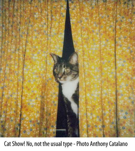 Cat Curtains