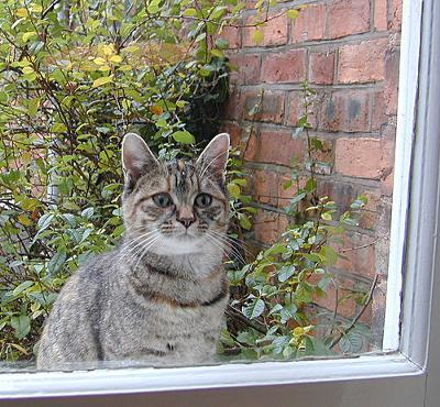 Where is my cat door...!? Photo by by Nigel Jones (Flickr)
