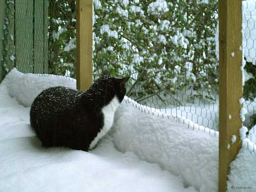 cat in the snow in an enclosure