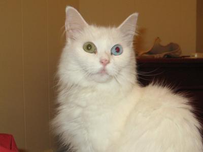 Crusty Eyes Cats Cat Eye Crust | Poc