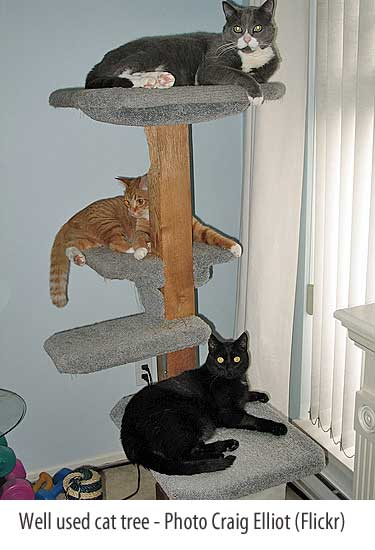 cat furniture cat tree