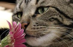 cat image of cat smelling a flower
