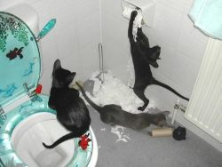 cats in a toilet