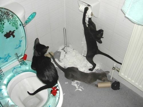 cats in a bathroom