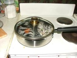 cat in saucepan
