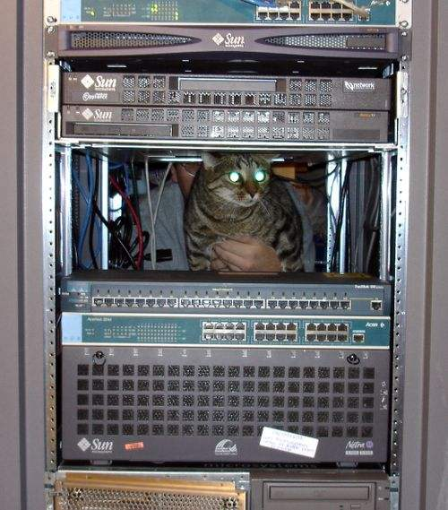 cat image of cat in a computer