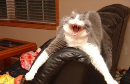 cat laughing