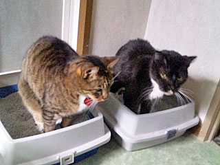 Cats using litter box