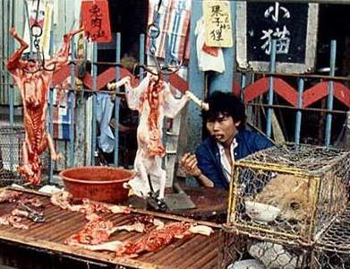 cat meat market - pictures of cats