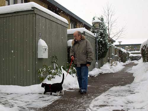 cat on a leash walking in the snow