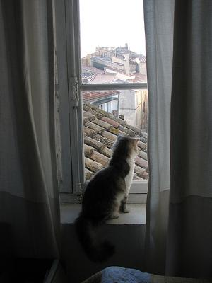 Who needs a cat window seat? Arles in France - Photo by kahala - the cat is called
