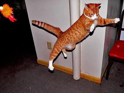 Cats can fly - photo by Matt Niemi (Flickr)