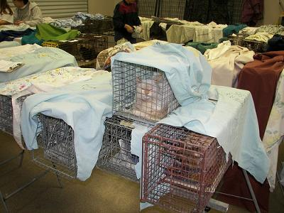 Feral cat clinic- cats being spayed and neutered - photo by Feral Indeed! (Flickr) - Picture added by Michael (Admin)