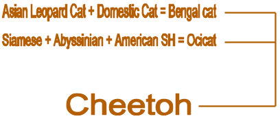 cheetoh schematic