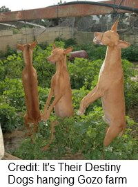 Maltese purebred dogs hanging from metal beam