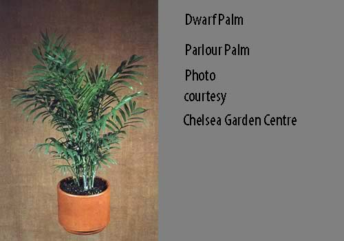 House plants safe for cats for Ponytail palm cats
