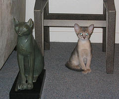 egyptian cat and statue