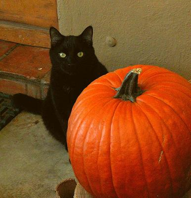 Black cats have suffered most from a fear of cats - photo cobalt123 under creative commons