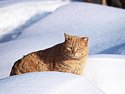 Canadian Feral cat - you are better off in the wild - photo by Bruce McKay (Flickr)