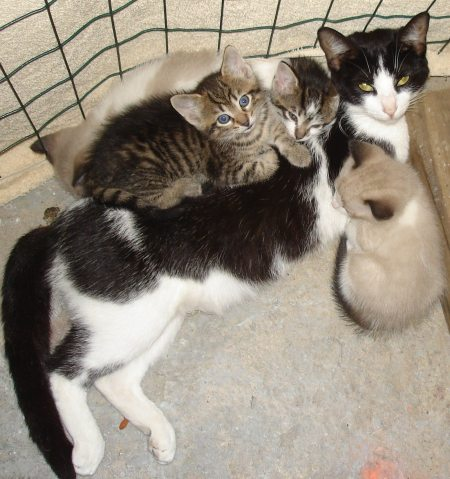 Elsie a feral cat and her kittens saved by Lori Smith