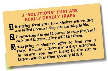 feral cat sign