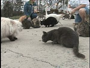Cats at Feral Friends