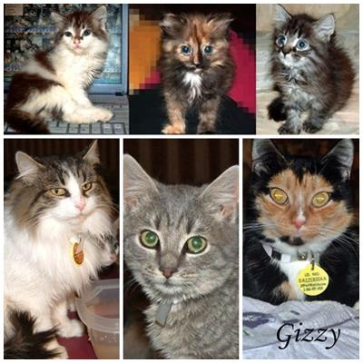My 6 rescues from the Greenville shelter