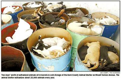THIS IS WHAT BREEDERS GIVE US. Every 2 days this is the kills in a typical county shelter