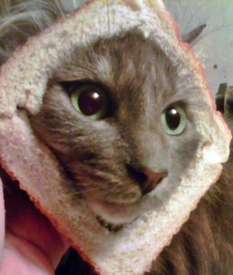 Furbys in bread cat photo