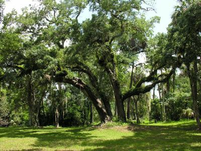 Loxahatchee River Battlefield Park - High ground