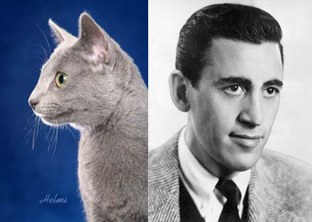 JD Salinger and Russian Blue