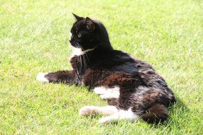 My late, great lady cat at aged 19