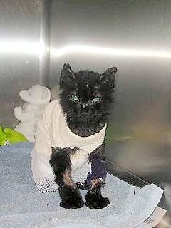 Kids Killing Cats -- or trying to - cat burned by two  girls for the fun of it - he survived - photo wndrngwlf  (Flickr) - Forgotten Felines of Sonoma County - see link base of page