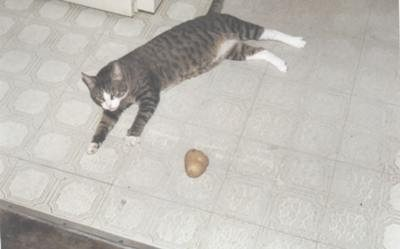 Charlie Caught A Potato