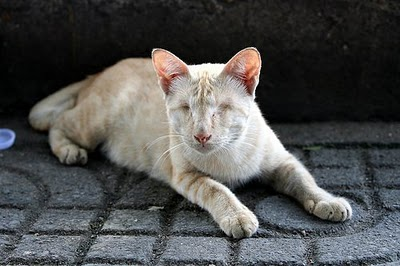 Blind Cat Thailand - Photo by AkumAPRIME (Flickr)