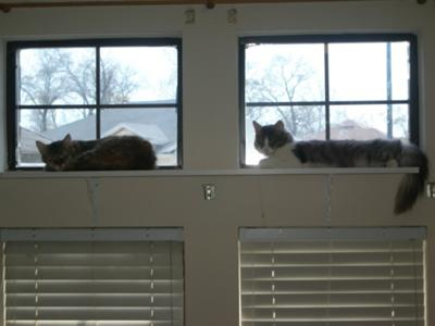 Shelf for the cats