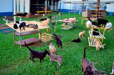 Photo added by Michael (Admin) - There are about 36 cats in this picture taken in a great sanctuary in Brazil - by fofurasfelinas (Flickr)