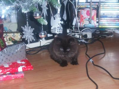 this is bubbadoo on christmas day x