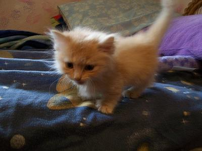 This is a photo of Kyo the week I brought him home. He's so small and skinny.