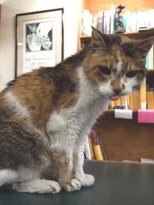 Old cat at a book store