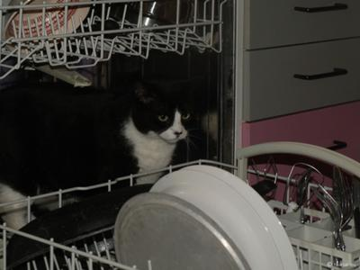 Snow White in the dishwasher