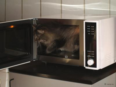 Milly in the microwave oven
