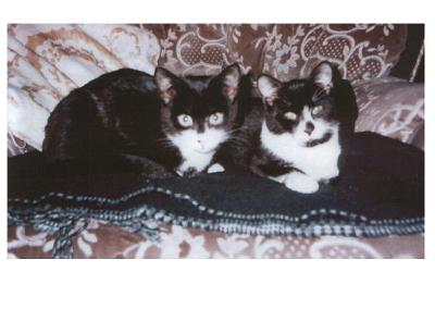 Jozef  (left) and Walter, as kittens