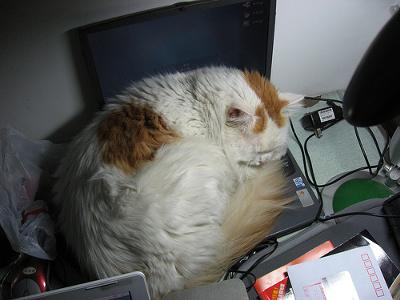 So you wanted to work on the computer? Patience please - photo by Yuxuan.fishy.Wang (Flickr).